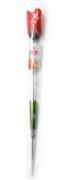 Цветок розы с трусиками