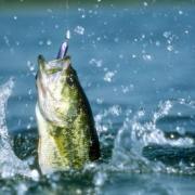 Клевая рыбалка