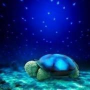 """Черепаха """"Звездное Небо"""""""